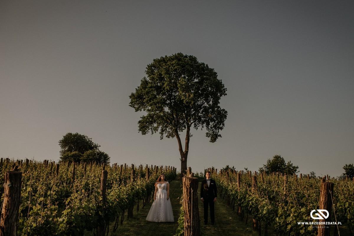 fotografia ślubna tarnow, sesja ślubna winnica